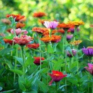 méthodes pour avoir un beau jardin